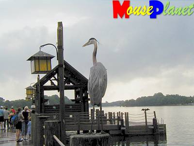 The boat dock's resident heron